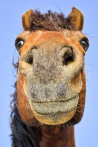 Horse sense for marketing on marketing tips blog